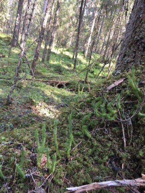 Kompetens-och erfarenhetsutbyte om skogens olika värden 18 november